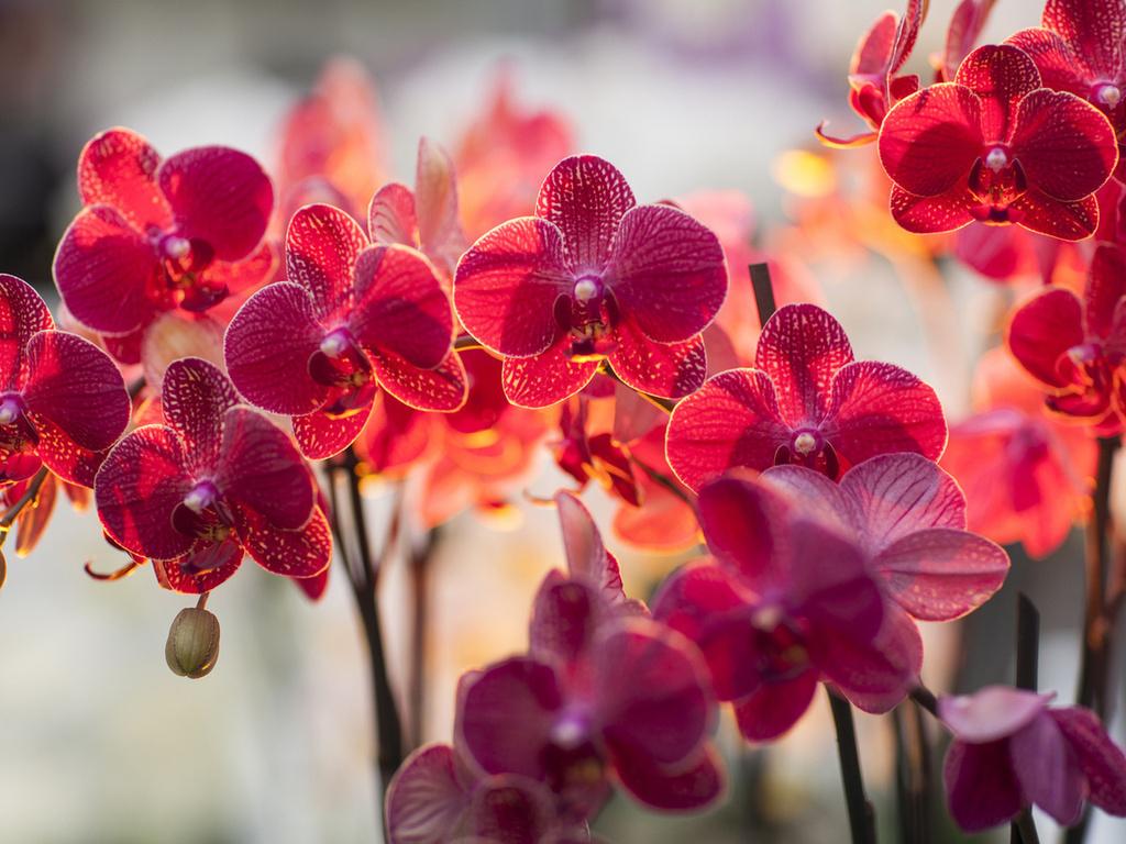 Орхидеи - все секреты ухода
